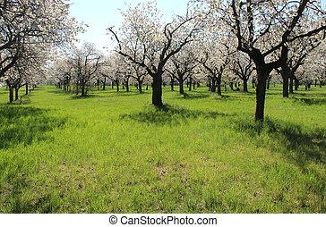 arbres, jardins, fleur