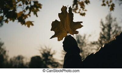 arbres., jaune, brouillé, par, fin, érable, briller, lent, feuille, soleil, arrière-plan., tenue, it., femme, nature, main, stirs, branches, lumière, haut, mouvement, brise
