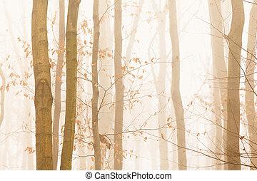 arbres, jaune, rapidement, clair, brouillard, disparaître