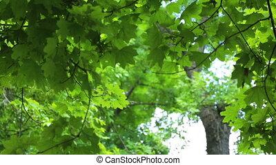 arbres, jour, brindilles, été