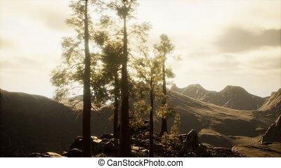 arbres, lumière, falaise, soleil
