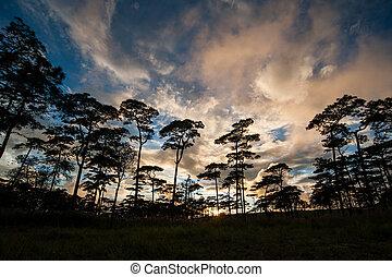arbres, lumière soleil, forêt