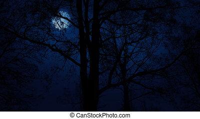 arbres, lune, passé, en mouvement, au-dessus, lentement