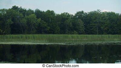arbres, négligence, tranquille, ciel, eau, baie, petit