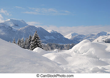 arbres, neige a couvert, dans, autrichien, paysage hiver