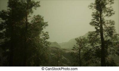 arbres, orage, accidenté, pin, brouillard, venir, flanc ...