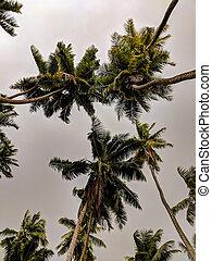 arbres, paume, avant, groupe, orage