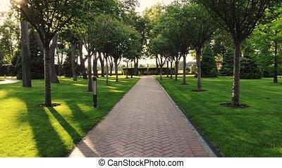 arbres., pavé, parc, chemin