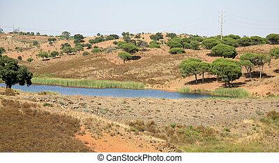 arbres, paysage, portugal, bouchon