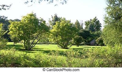 arbres., pelouse