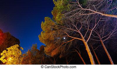 arbres pin, sous, a, ciel étoilé