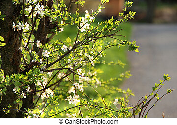 arbres, printemps, fleur