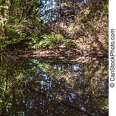 arbres réflexion, lac