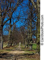 arbres., revêtu, avenue, sentier