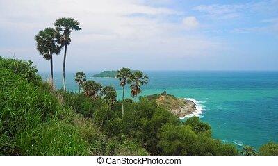 arbres, rochers, exotique, plage paume, paysage