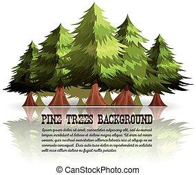 arbres, sapins, fond, pin