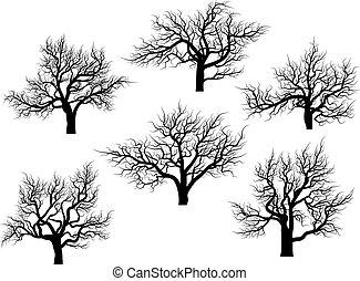 arbres., silhouettes, chêne