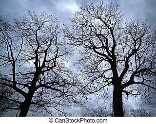 arbres, soir, ciel, sans feuilles, contre