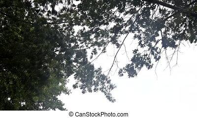 arbres, temps, pluie, fort, vent, lourd, souffler, orage