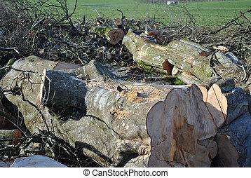 arbres tombés