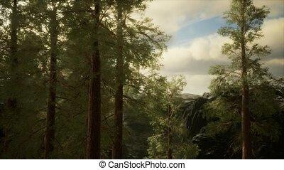arbres, venir, flanc montagne, brouillard, accidenté, pin, ...