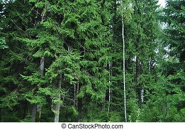 arbres verts, dans, forêt