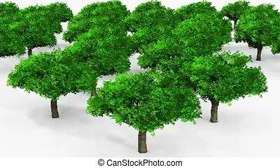 arbres, vue aérienne