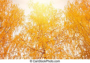arbres., vue