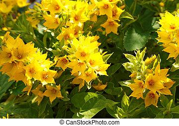 t fleurs paysage montagne jaune images de stock rechercher des photos des images et des. Black Bedroom Furniture Sets. Home Design Ideas