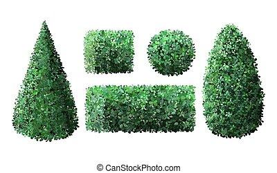 arbrisseau, buisson, vecteur, barrière, nature, jardin, arbre, géométrique, vert, réaliste, jardinier, couronne, barrière, illustration, feuillage, topiary, bushes., ensemble, saisonnier