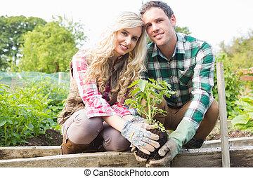 arbrisseau, planter, couple, jeune
