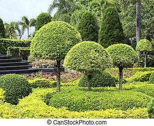 arbrisseaux, jardin