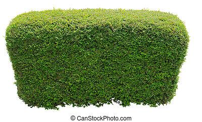 arbusto, redondo