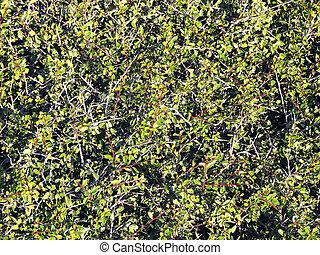 arbusto, textura