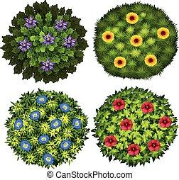 arbustos, com, flores coloridas