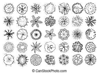 arbustos, desenho, jogo, topo, árvores, isolado, experiência., arbustos, vetorial, pretas, plan., vário, branca, ilustrações, paisagem, vista