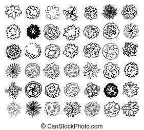 arbustos, ilustração, topo, árvores, isolado, experiência., arbustos, vetorial, desenho, plan., branca, paisagem, vista