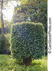 arbustos, parque