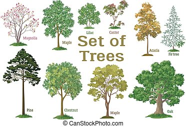 arbustos, plantas, conjunto, árboles