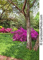 Hermoso arbustos rododendro jard n soleado rboles - Rododendro arbol ...