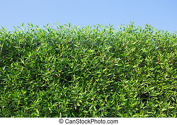 arbustos, verde