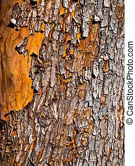 Arbutus bark - Arbutus tree bark