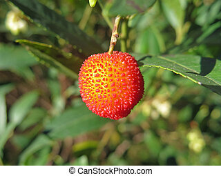 arbutus in the branch