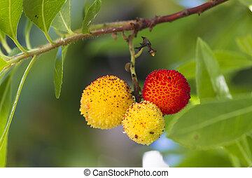 arbutus on tree