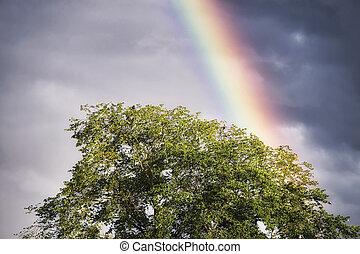 arc-en-ciel, arbre, oiseaux
