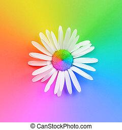 arc-en-ciel, fleur, arrière-plan coloré