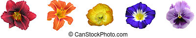 arc-en-ciel, floral, barre
