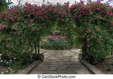 arc of roses in park, town of Rousse, Bulgaria