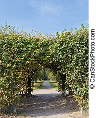 Arch of plants