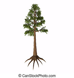 Archaeopteris sp Tree - Archaeopteris is an extinct genus of...